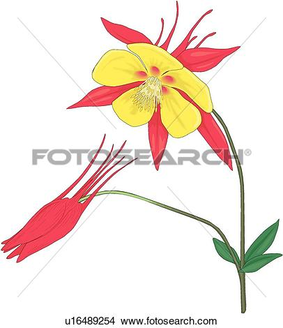 Columbine clipart #6, Download drawings