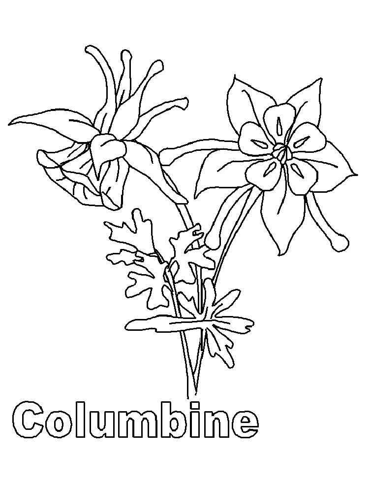 Columbine coloring #6, Download drawings
