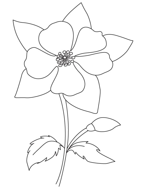 Columbine coloring #5, Download drawings