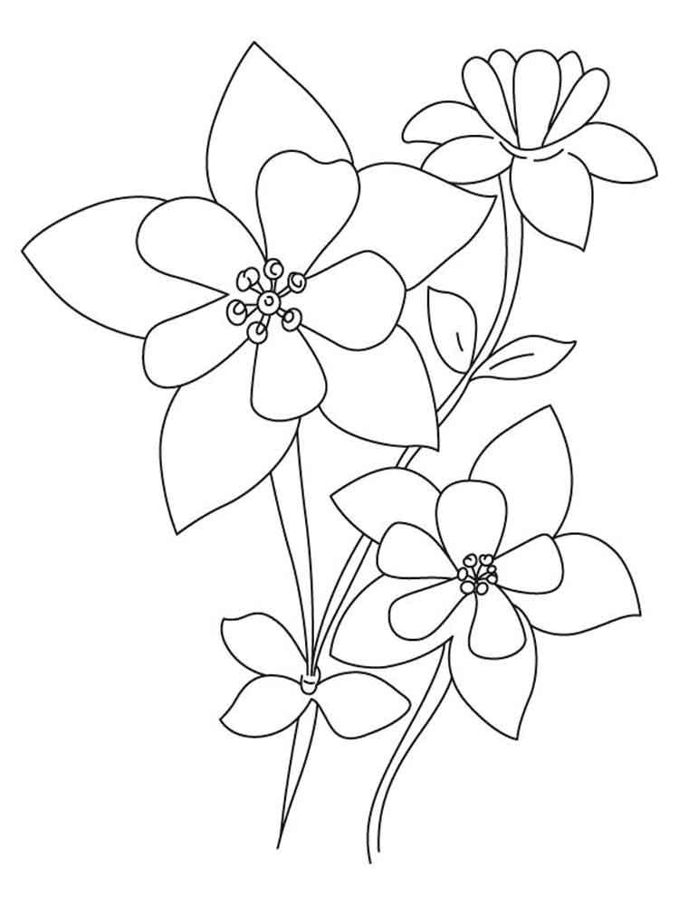 Columbine coloring #15, Download drawings
