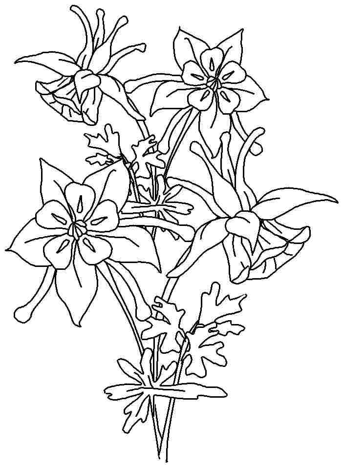 Columbine coloring #14, Download drawings