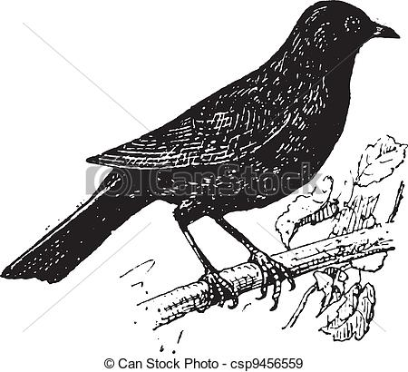 Common Blackbird clipart #20, Download drawings