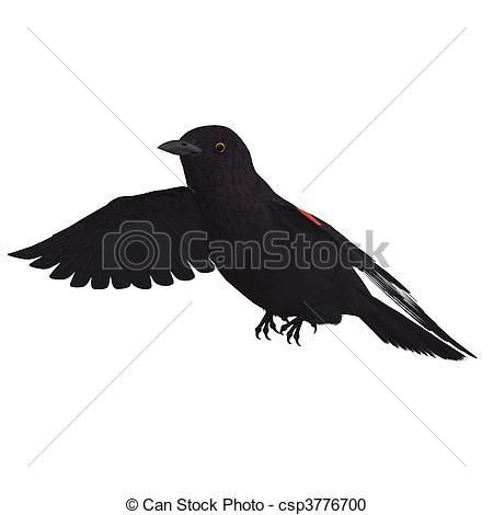 Red-winged Blackbird clipart #7, Download drawings