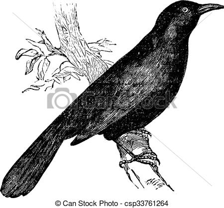 Common Blackbird clipart #15, Download drawings