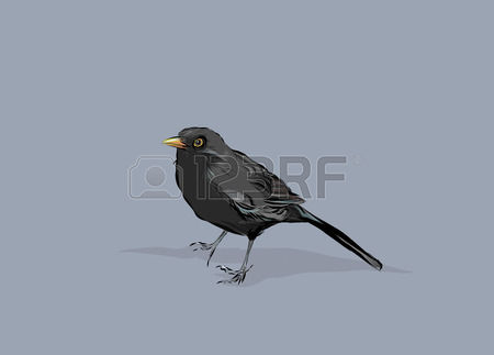 Common Blackbird clipart #4, Download drawings