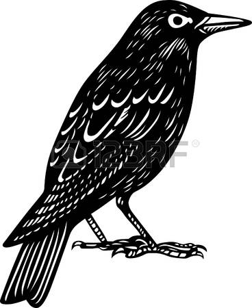 Common Blackbird clipart #8, Download drawings