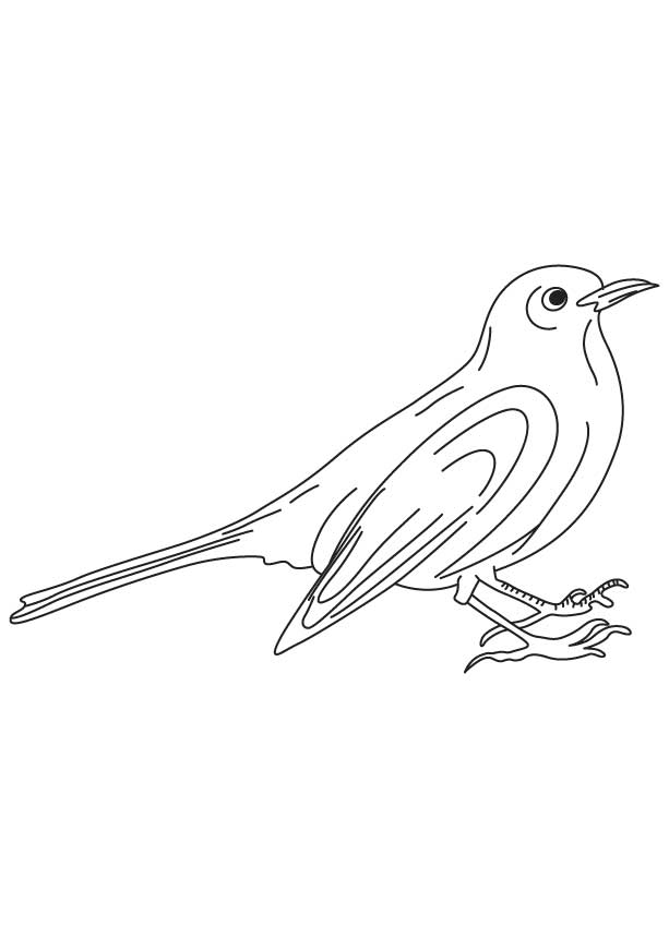 Common Blackbird coloring #10, Download drawings