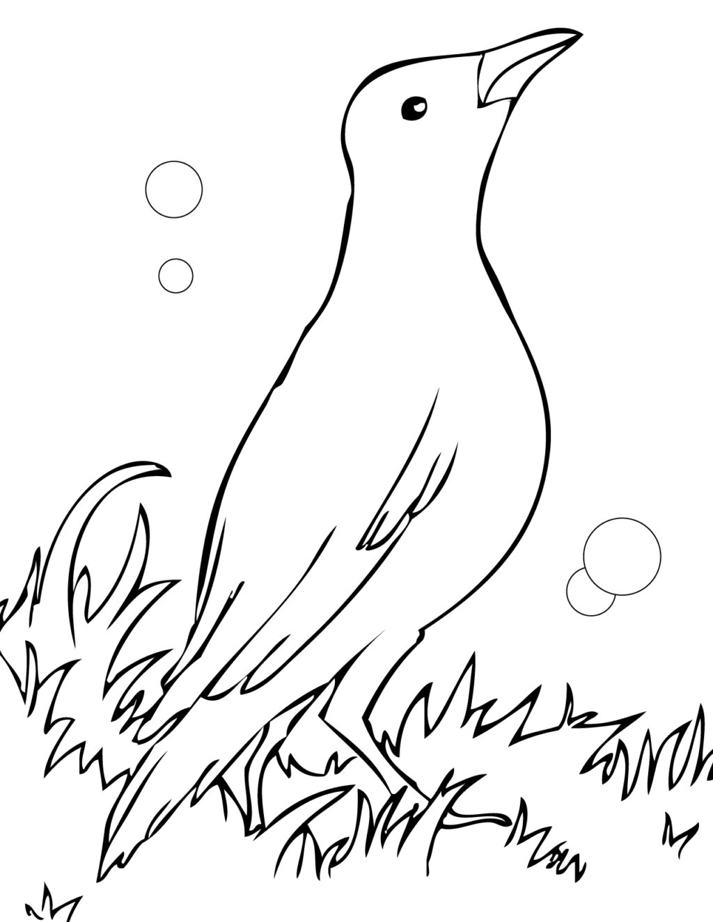 Common Blackbird coloring #7, Download drawings