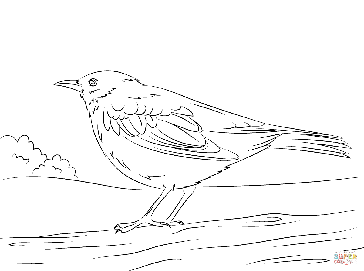 Common Blackbird coloring #4, Download drawings
