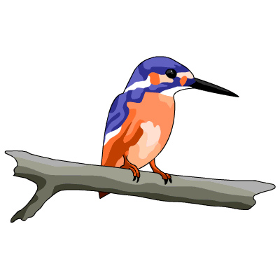 Common Kingfisher clipart #11, Download drawings