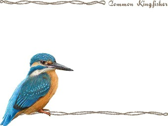 Common Kingfisher clipart #8, Download drawings