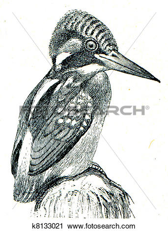 Common Kingfisher clipart #14, Download drawings