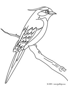 Common Kingfisher coloring #13, Download drawings