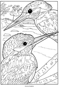 Common Kingfisher coloring #8, Download drawings