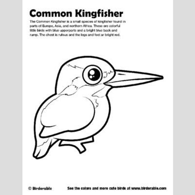 Common Kingfisher coloring #18, Download drawings