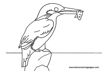 Common Kingfisher coloring #11, Download drawings