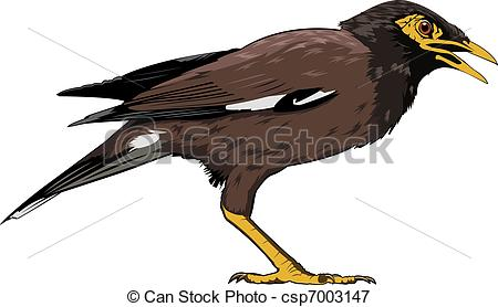 Myna clipart #4, Download drawings