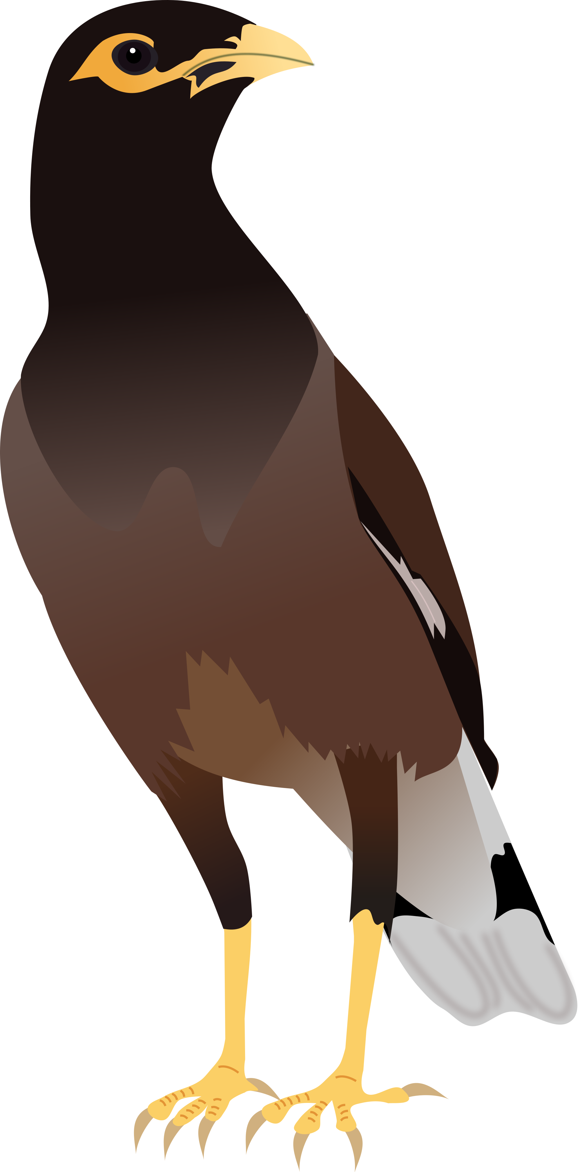 Myna clipart #3, Download drawings