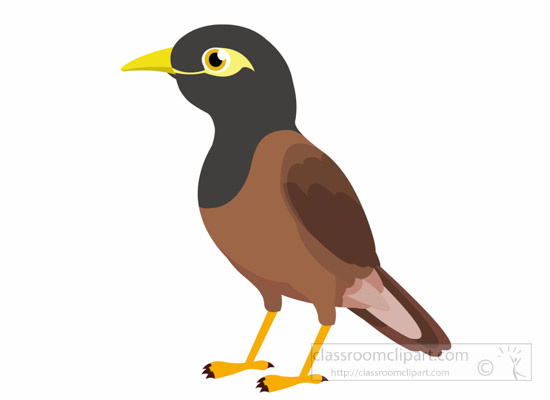 Myna clipart #2, Download drawings