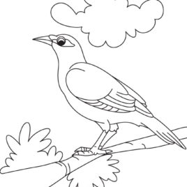 Common Myna coloring #17, Download drawings