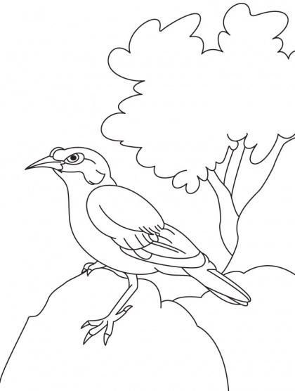 Common Myna coloring #18, Download drawings