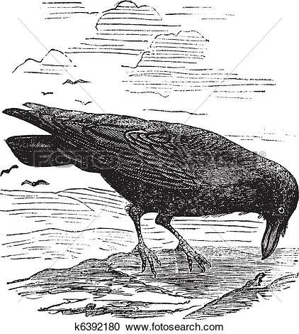 Common Raven clipart #10, Download drawings