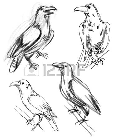 Common Raven clipart #4, Download drawings