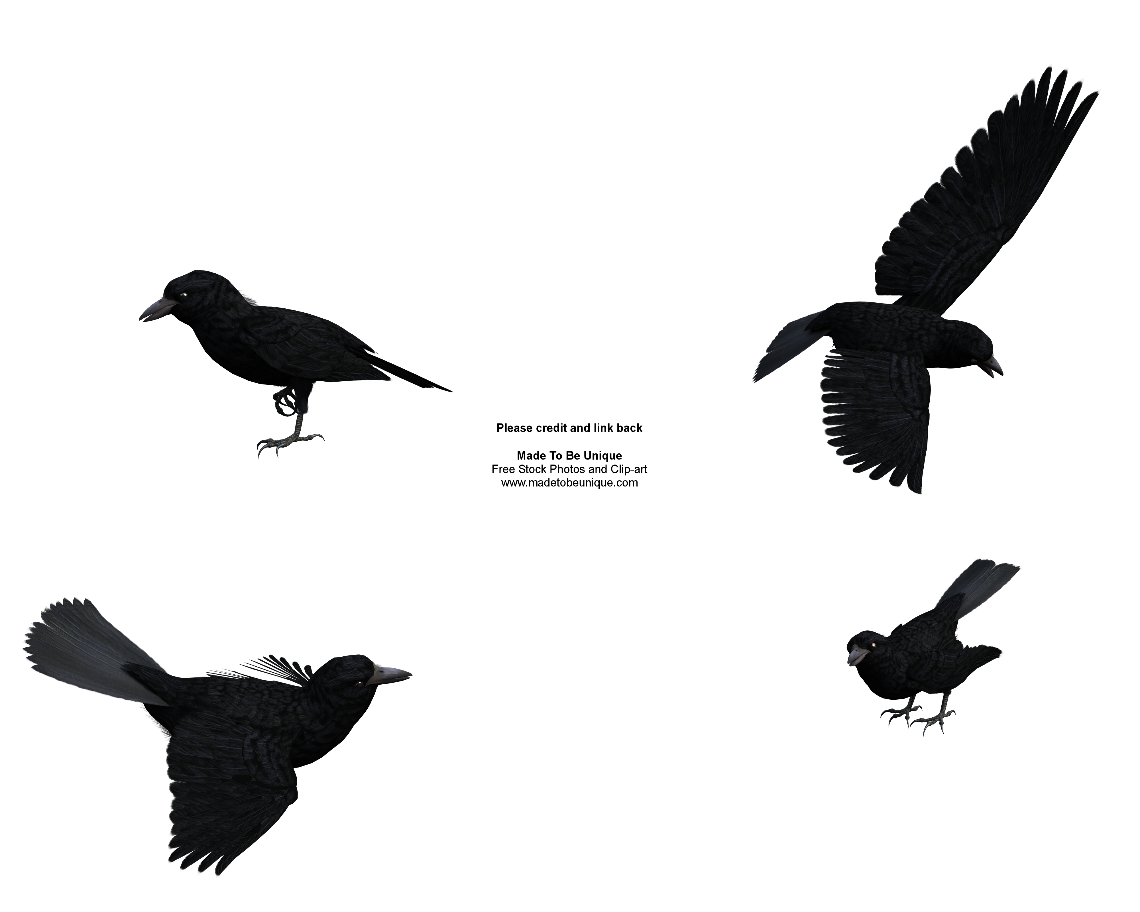 Common Raven clipart #1, Download drawings