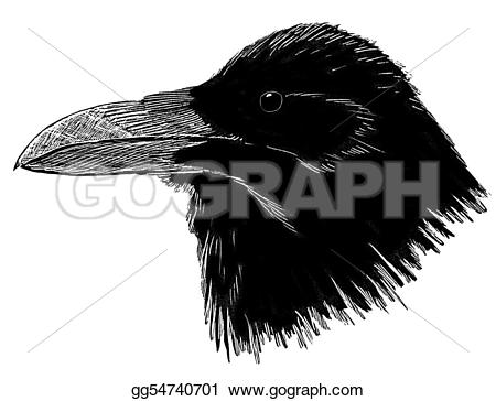 Common Raven clipart #9, Download drawings