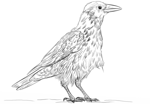 Common Raven coloring #9, Download drawings