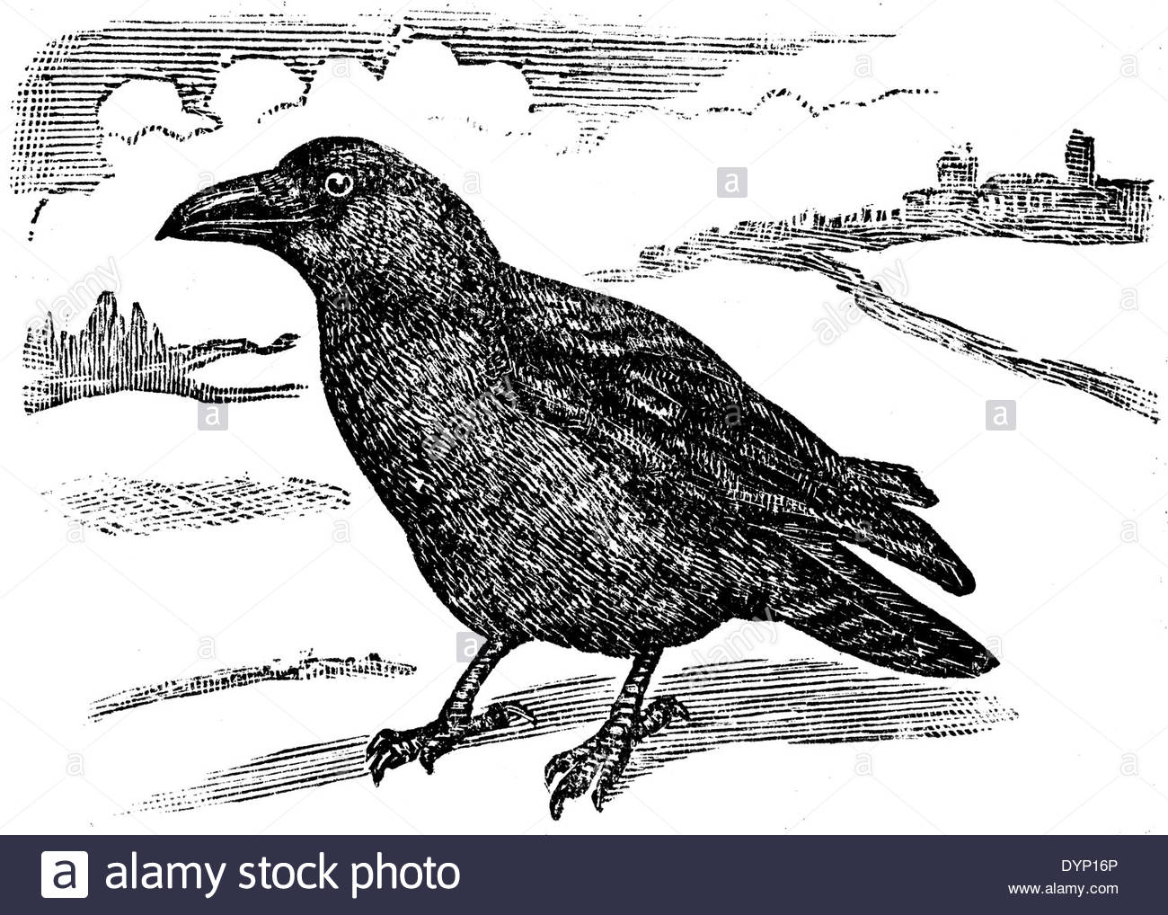 Common Raven coloring #7, Download drawings
