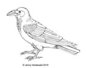 Common Raven coloring #13, Download drawings
