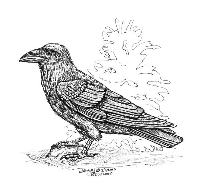 Common Raven coloring #10, Download drawings
