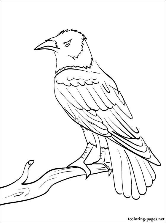 Common Raven coloring #19, Download drawings