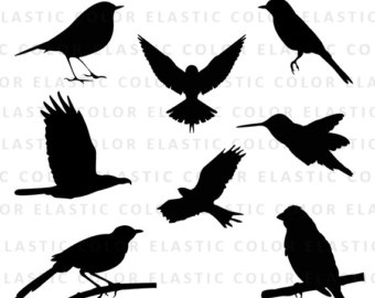 Red Headed Finch svg #6, Download drawings