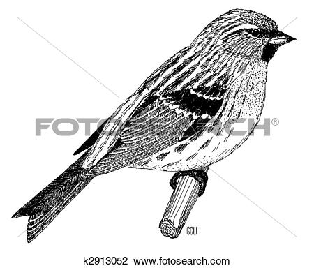 Common Redpoll clipart #20, Download drawings