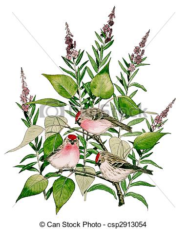 Common Redpoll clipart #15, Download drawings