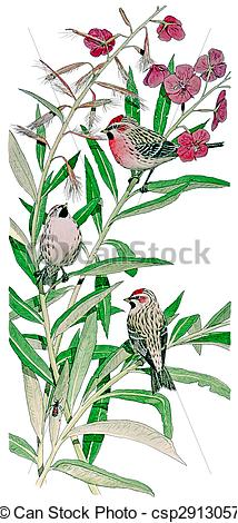 Common Redpoll clipart #4, Download drawings
