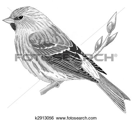 Common Redpoll clipart #19, Download drawings