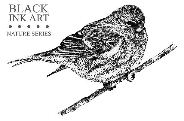 Common Redpoll clipart #10, Download drawings