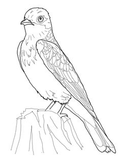 Common Redpoll coloring #7, Download drawings
