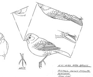 Common Redpoll coloring #20, Download drawings