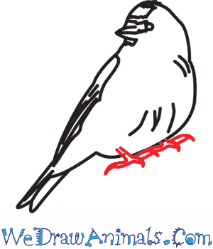 Common Redpoll coloring #2, Download drawings