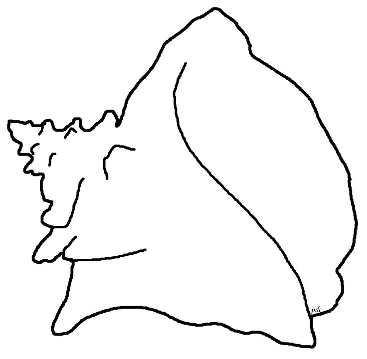 Conch clipart #14, Download drawings