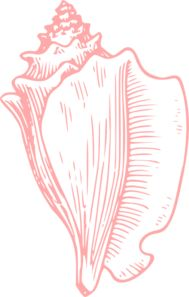 Conch clipart #15, Download drawings