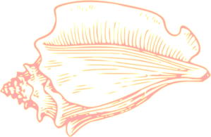 Conch clipart #12, Download drawings