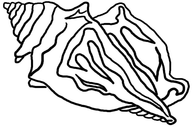 Conch clipart #6, Download drawings