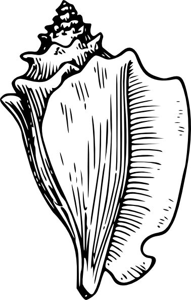Conch clipart #13, Download drawings