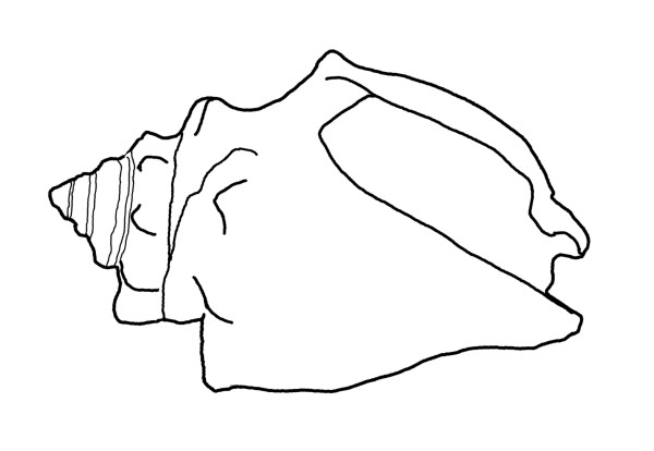 Conch coloring #20, Download drawings