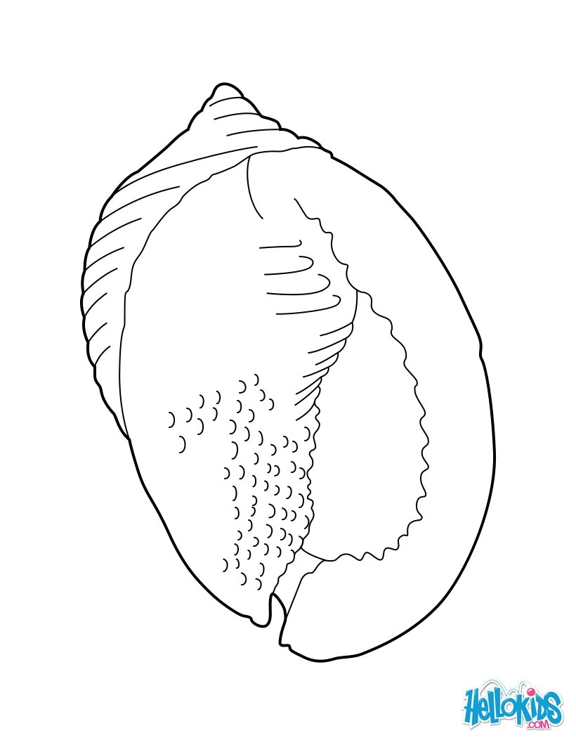 Conch coloring #6, Download drawings